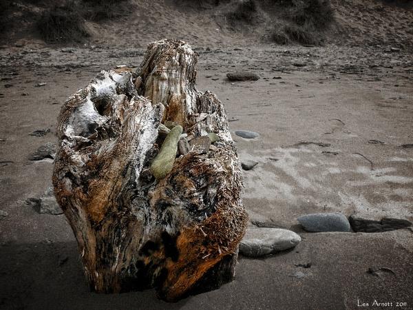 Driftwood by lesarnott