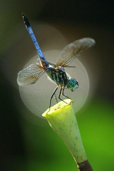 "\""George\"" by dragonflies8888"