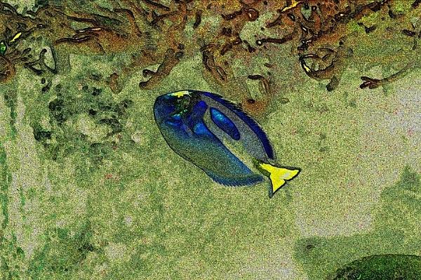 Fish - Sketch Effect by ian_w