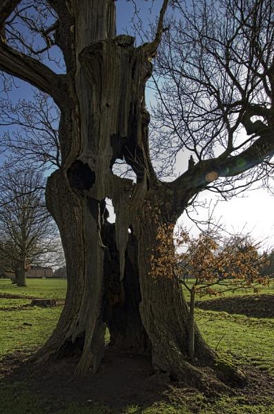 Lightning Tree by royd63uk