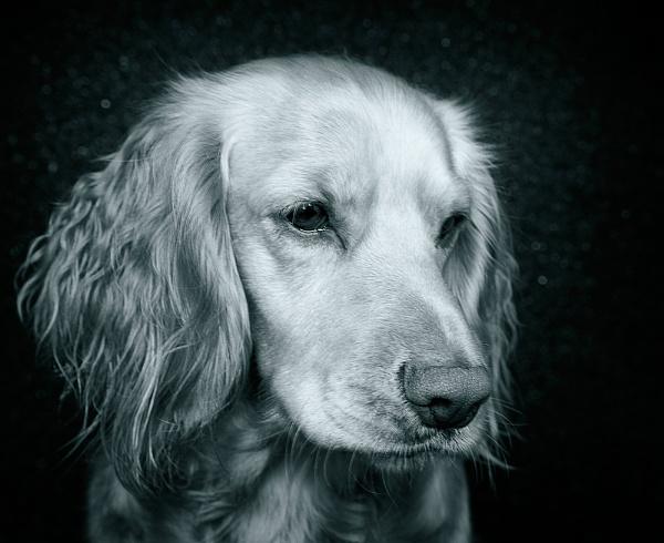 Daisy by CathyT
