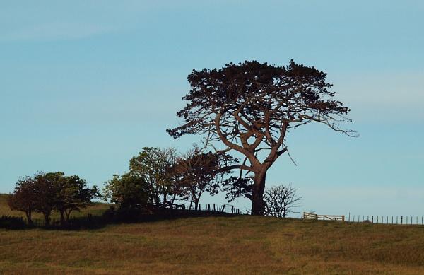 NZ Tree On A Hill by chensuriashi