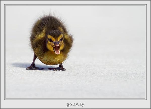 go away by joze
