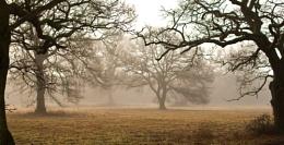 Alderholt Mist