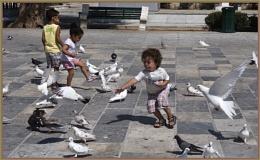 Catch The Birdie
