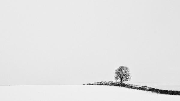 Snowy Skies by WilliamRoar