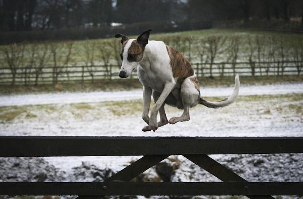 Fence Hopper by FastDog