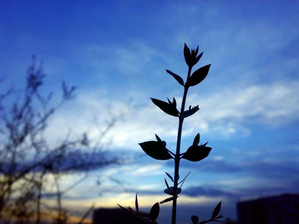 new hope by khaled_shams