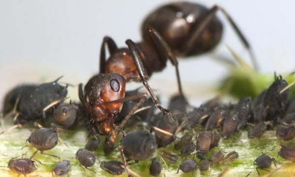 Ant farm by neil john