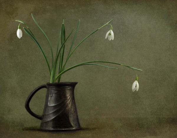 Snowdrop 2 by whipspeed