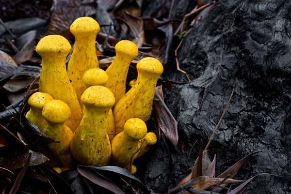 Fungi on Fire Damaged Tree by Zydeco_Joe