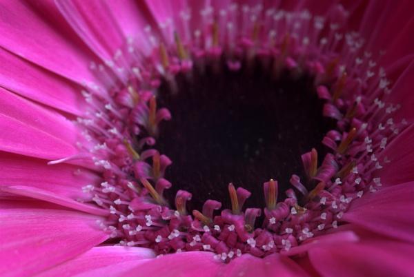 Bloom by GillesG