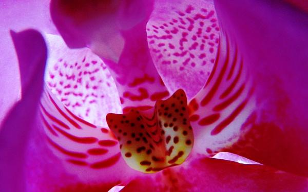 Flower Power by david1000
