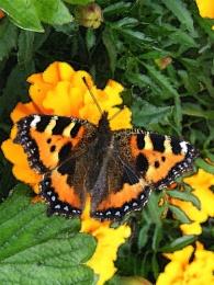Butterfly Watercolour