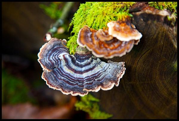 Autum Fungi by BernieS