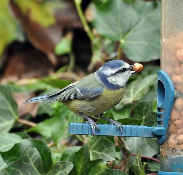 A beak full!! by janetpac