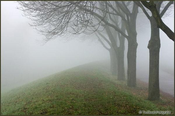 Fog-2 by tebo