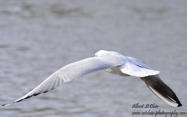 In Flight by breadicus