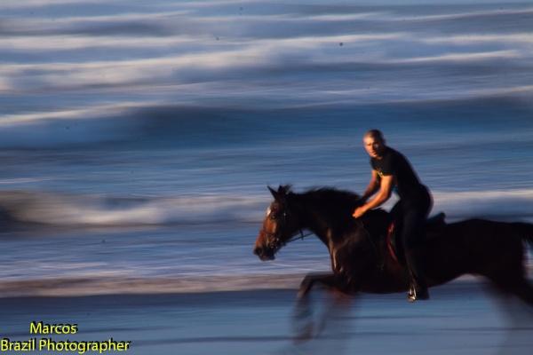 cavalo by CONDE