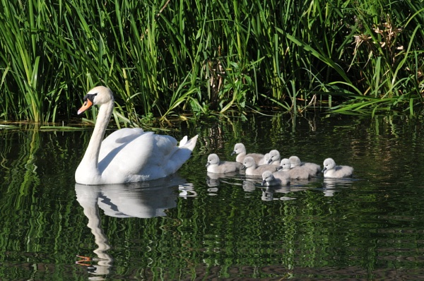 Nine Ugly Ducklings! by Hoverfly