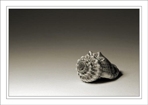 Shell.... by ejtumman