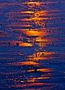 Golden Light by JJGEE