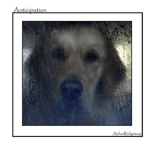 Anticipation by Ridgeway