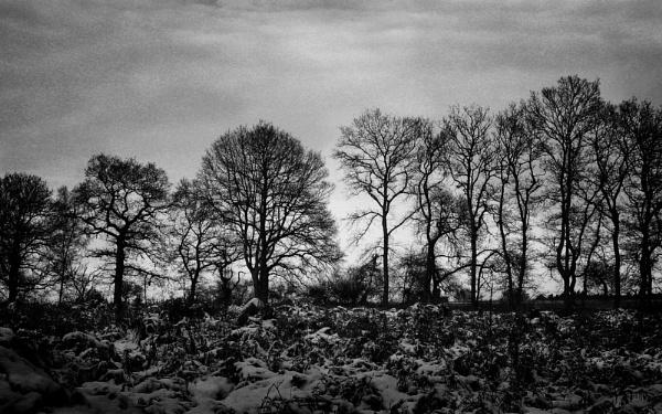 Tranquillity by david1000