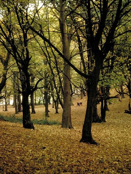Autumn by derekv