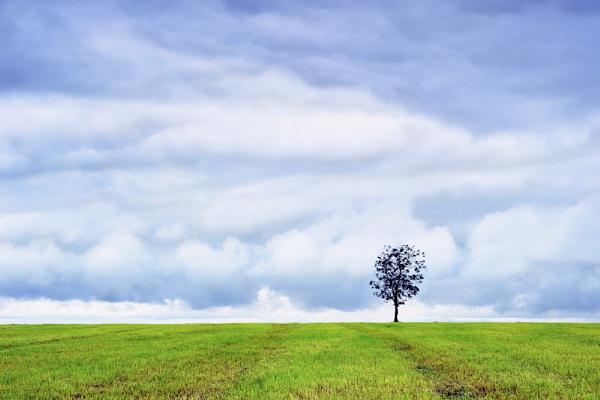 The Farmer\'s Tree by Esge