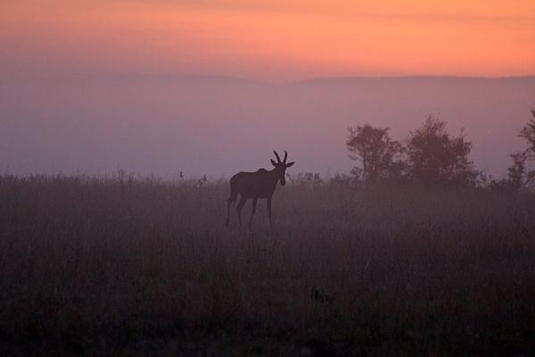 Dawn by mjparmy