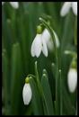 spring by alianar