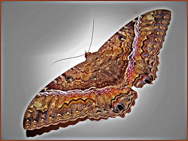 Enhanced monster moth by EddyG