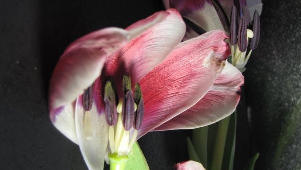 Spring by Chorobin