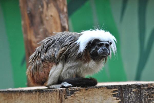 grunmpy little monkey! by scartlane