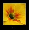 Spring by BenKiteley