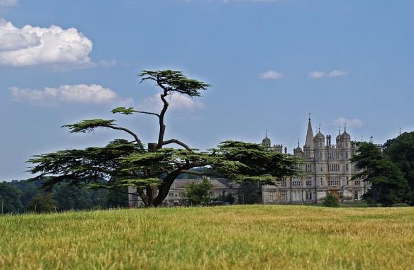 Burghley House Cedar by Hoverfly