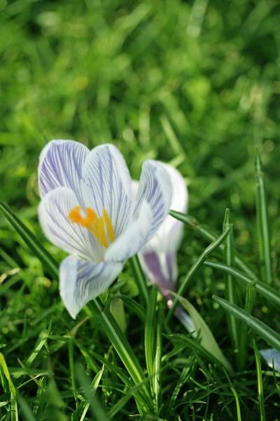 flower in grass by jimbob5643