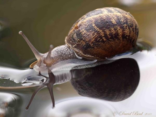 Snail by DavidBird