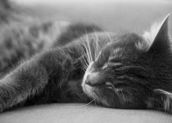 Evening Snooze by joss