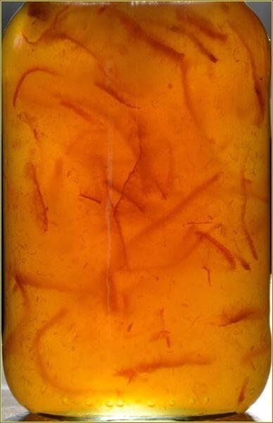 Marmalade by JPatrickM