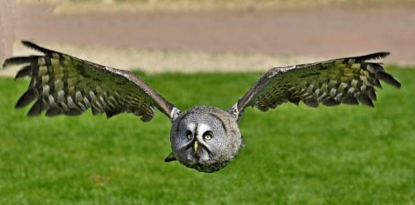 Kirby Wiske Owl by Kruger01