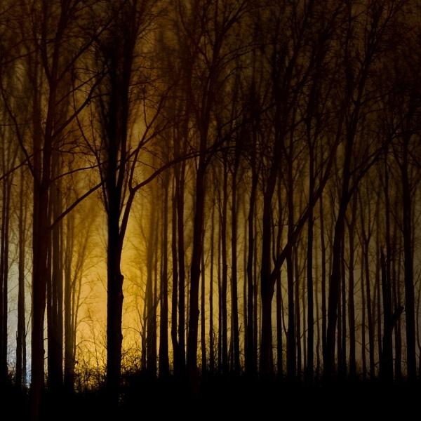 Dark woodland by rhobbie
