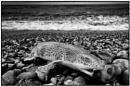 Dogfish by CaptivePhotons