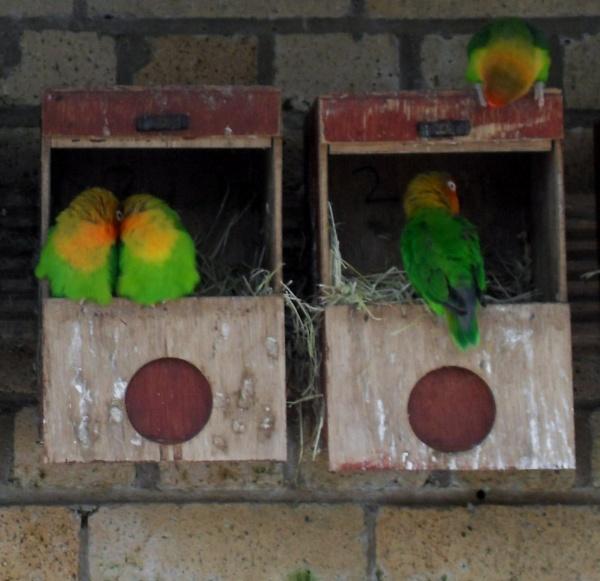 Love Birds by maryatsix
