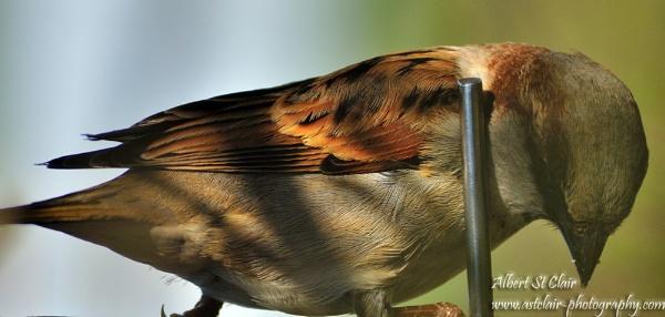 Bird by breadicus