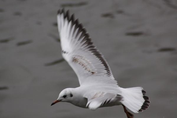 in flight by glennmeeds