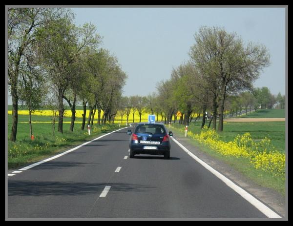 An L-driver in Poland by Elizabethh