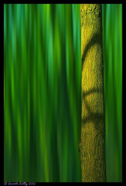 Green Woods by frispy
