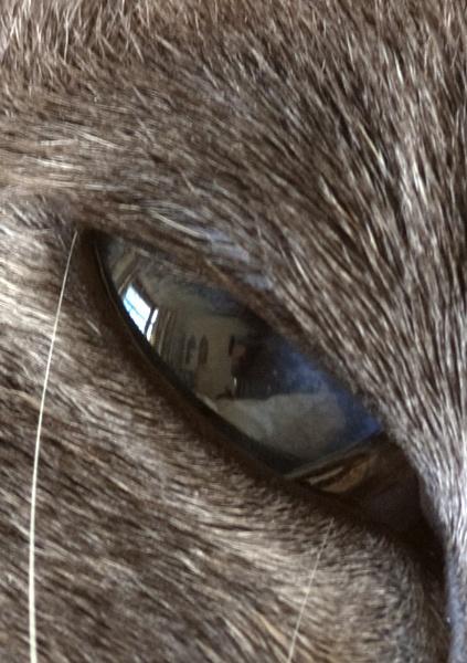 Cat\'s Eye by DavidBird